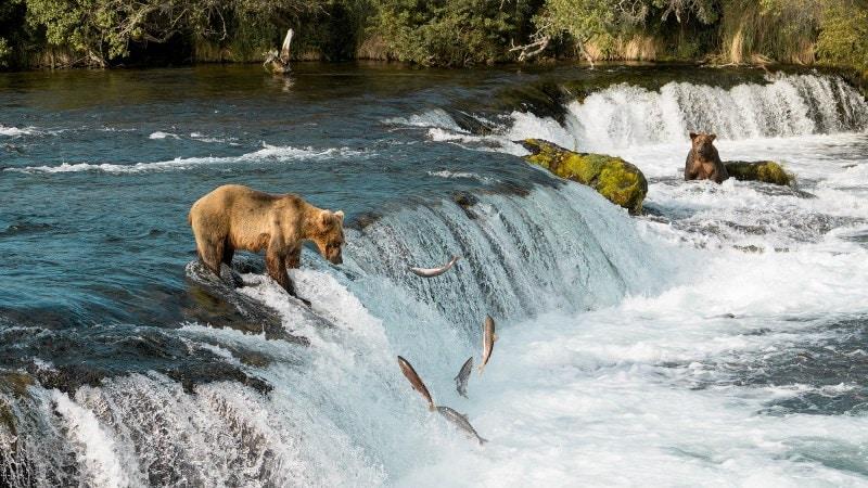 Exploring Bear Country in Katmai National Park, Alaska