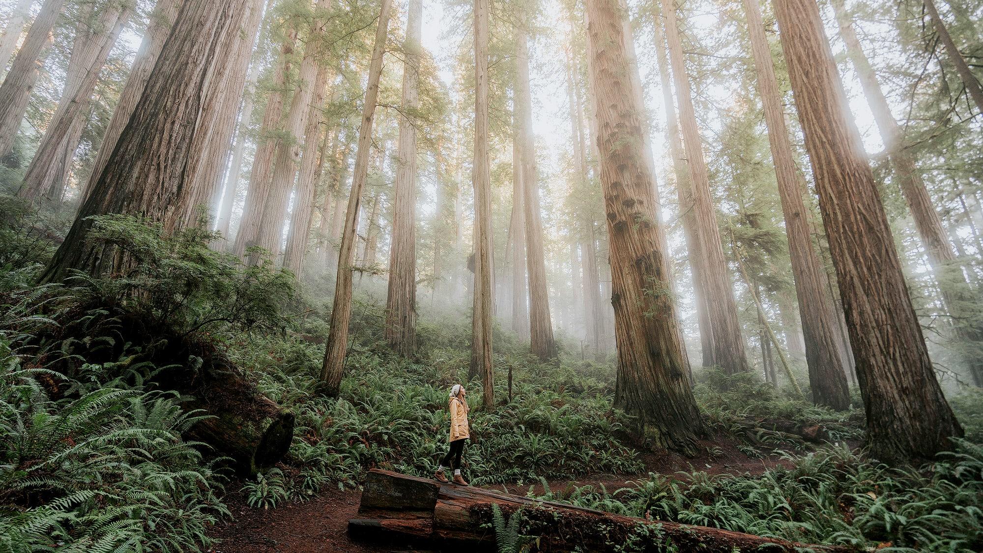 Winter California Road Trip – Redwoods and Yosemite