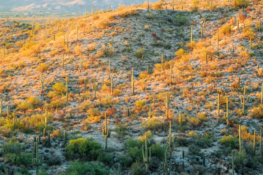 The 15 Most Underrated National Parks in America - Saguaro 02