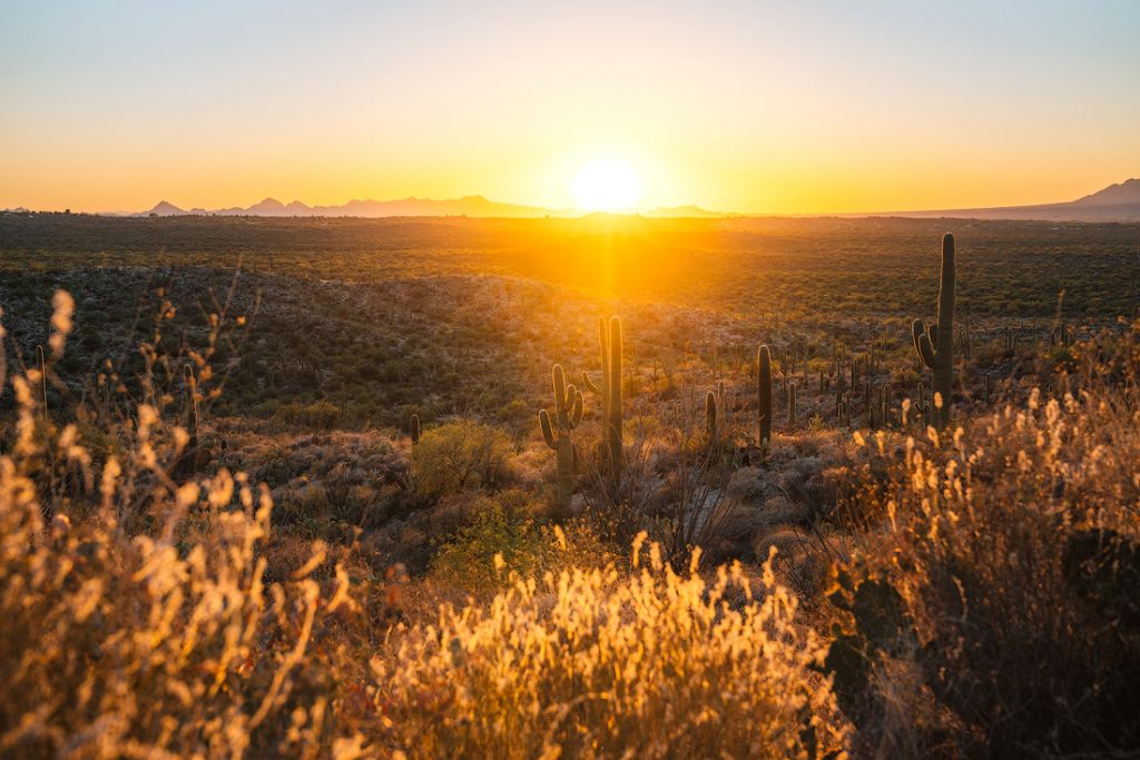 The 15 Most Underrated National Parks in America - Saguaro