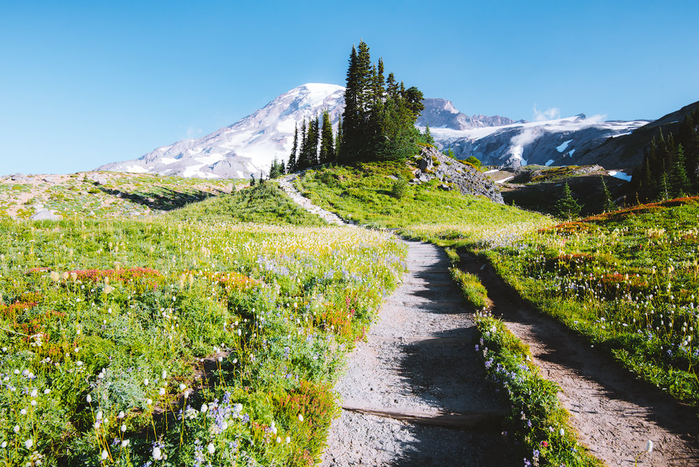 Mount Rainier National Park Guide - Everything You Need to Know - Renee Roaming - Paradise