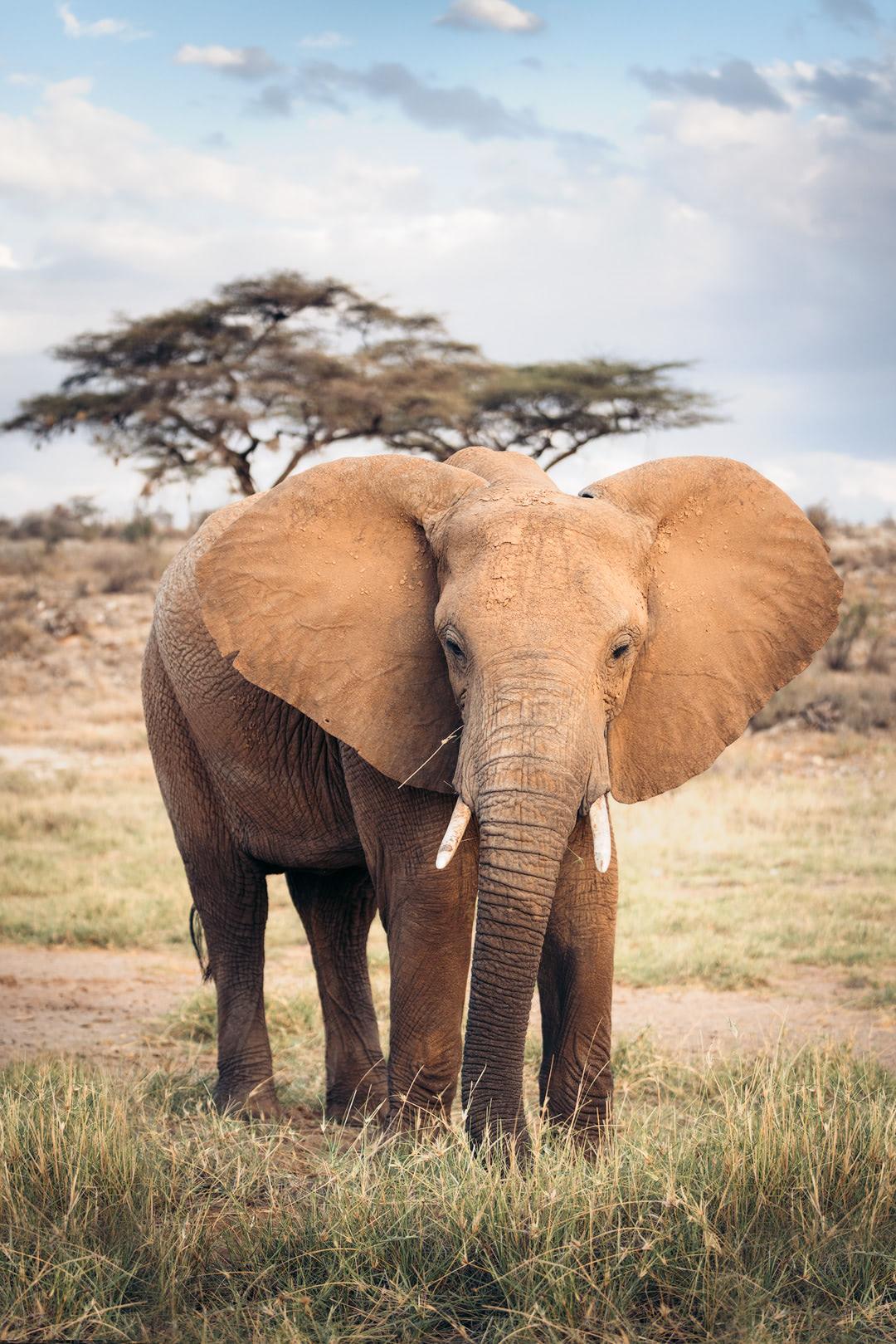 A Magical Stay at Ashnil Samburu Camp, Kenya - Elephant