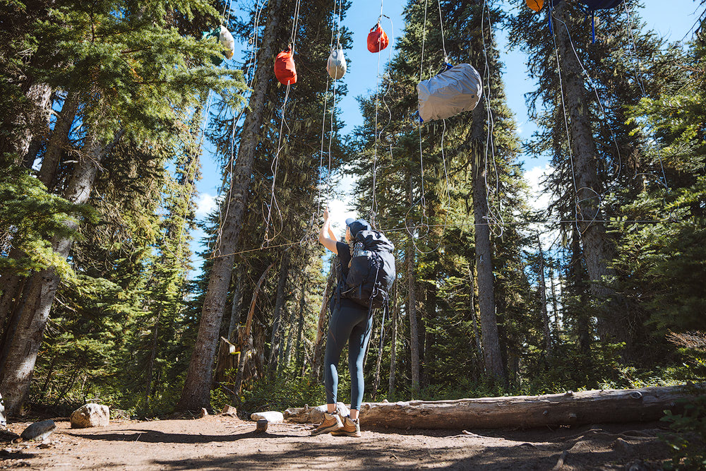 Introduction to Bear Safety when Hiking and Camping - hanging a bear bag in Garibaldi Provincial Park