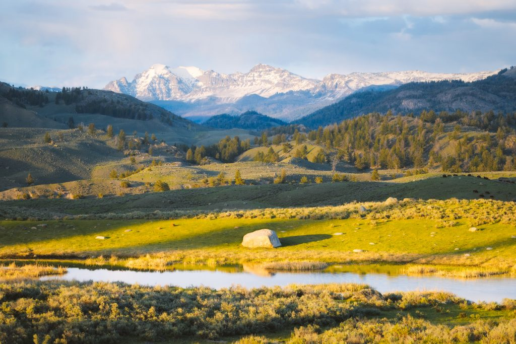 Ultimate Yellowstone National Park Guide and Itinerary - Lamar Valley