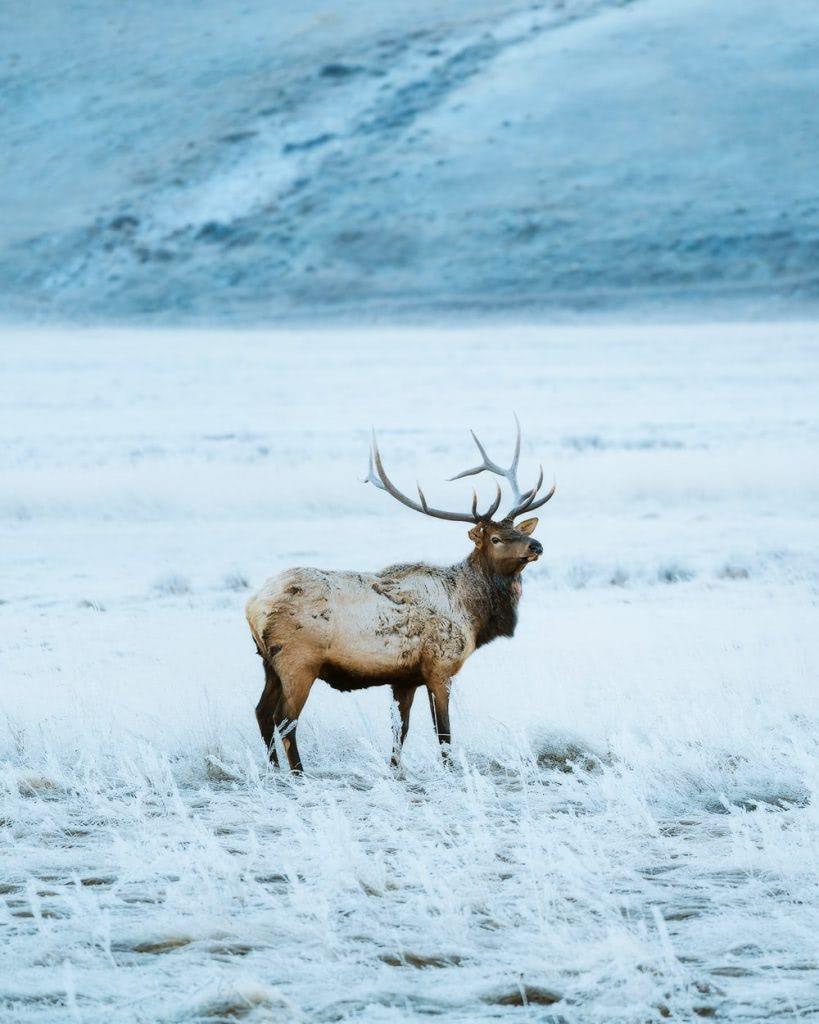 12 Best National Parks to Visit in Winter - Grand Teton National Park Elk