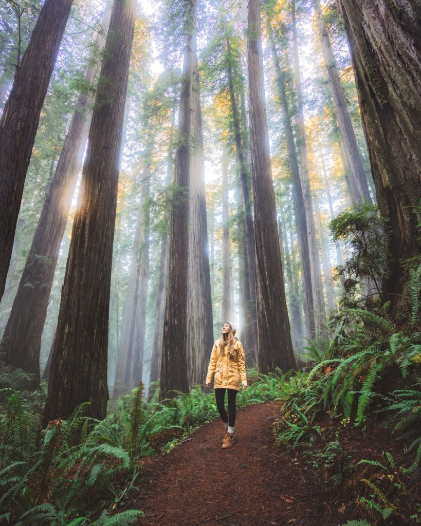 12 Best National Parks to Visit in Winter - Redwood State and National Parks Hiking
