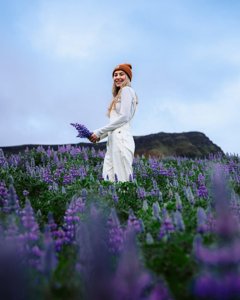 Incredible Iceland Road Trip Itinerary and Planning Guide - Lupine Field