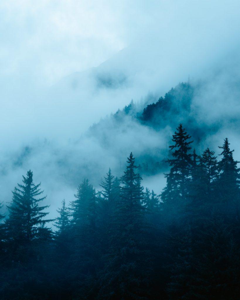 Epic 6 Day Southeast Alaska Itinerary - Foggy Trees