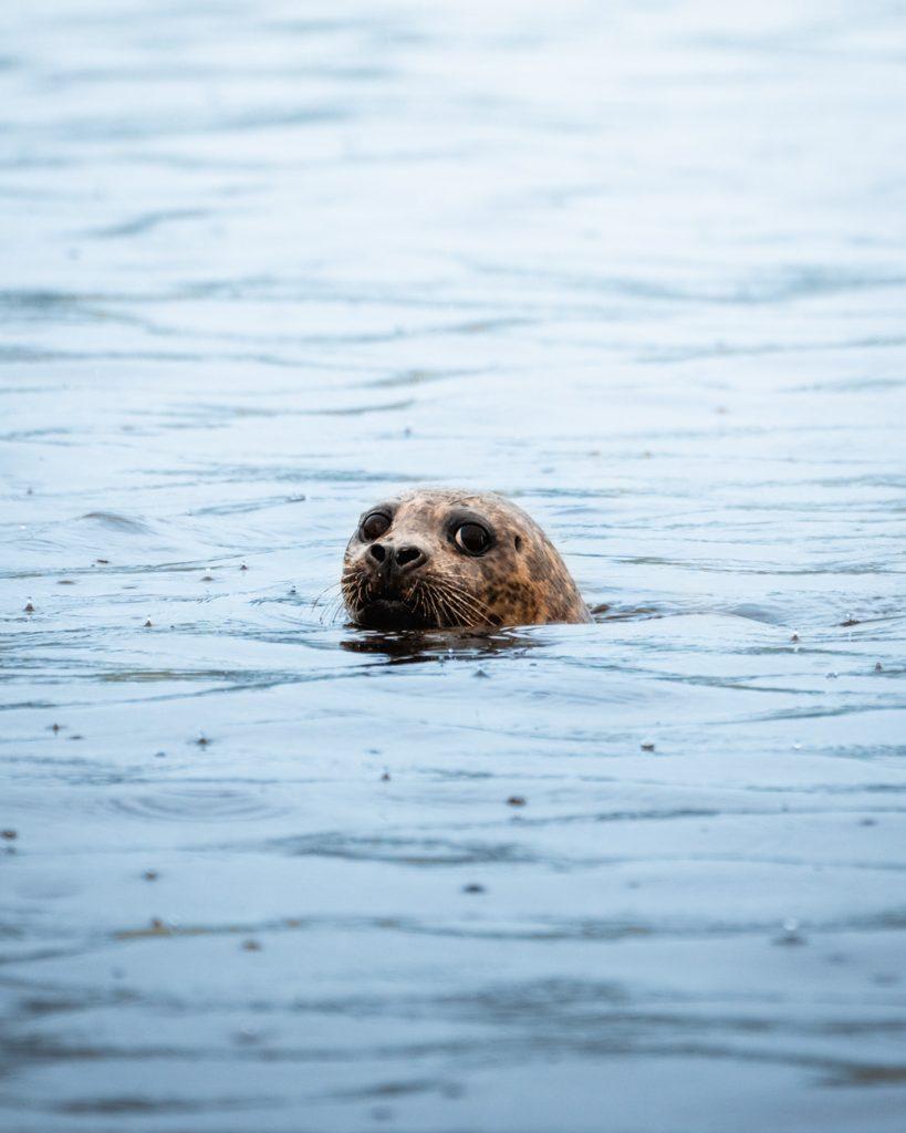 Prince of Wales Wildlife Tour - Seal